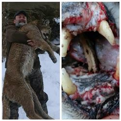 Aaron Nielson Mountain Lion Hunt