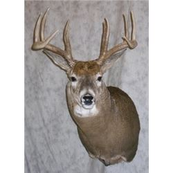 Natures Own Whitetail/Mule Pedestal
