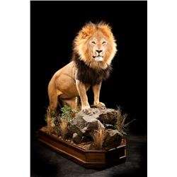 Kanati Life Size Taxidermy