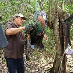SUW Mexican Ocellated Jungle Turkey Hunt