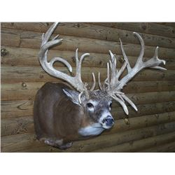 Zander Taxidermy Shoulder Mount Whitetail, Mule or Antelope