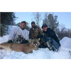 Pine Valley Outfitters 2 Man Cougar Hunt
