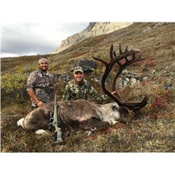 Big Game Back Country Guides Caribou