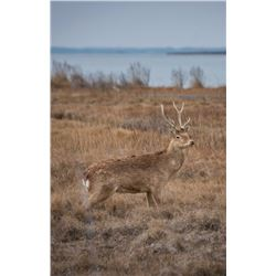 Williamson Outfitters 2 Youth 2 Day Sika Hunt