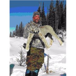 7-Day Southern British Columbia, Canada lynx hunt for 1 hunter
