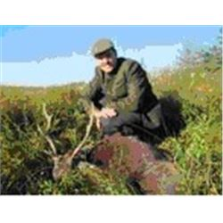 3-day Sika Stag hunt in Ireland for 1 hunter and 1 Observer