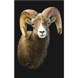 $750 Taxidermy Credit with Wildlife Expressions of Durango