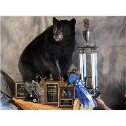 TAXIDERMY CREDIT FOR $2000