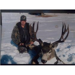 BRITISH COLUMBIA MULE DEER HUNT FOR TWO HUNTERS
