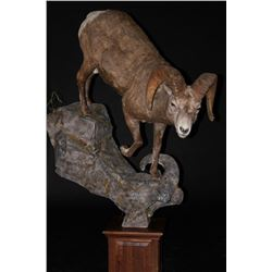 $1250 Taxidermy Credit