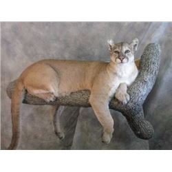 $500 Martin's Taxidermy and Wildlife Artistry Credit