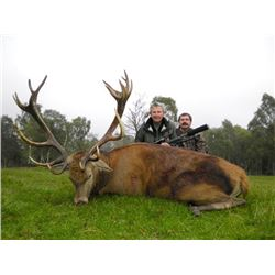 Scottish Red Stag Hunt for One Hunter