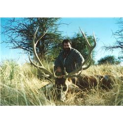 Argentina Red Stag Hunt for One Hunter