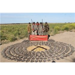 Paco Riesta High Volume Dove Hunt for 4 Hunters
