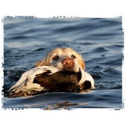 Chesapeake Bay Sea Duck Hunting for 4 Hunters