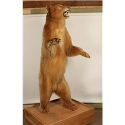 Full Standing Bear Mount