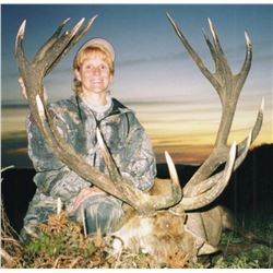 5-Day New Zealand Red Stag and Fallow Buck Hunt for Two Hunters