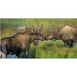 Alaska Delta Junction Moose Permit (DM 975)