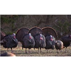 2-day/3-night Kansas Eastern Turkey Hunt for Two Hunters