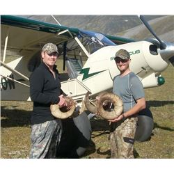 Alaska Dall Sheep Hunt for One Hunter (Air Charter Service)