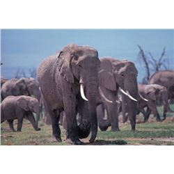 5-day/4-night Zimbabwe Bull (cull) Elephant Hunt for One Hunter