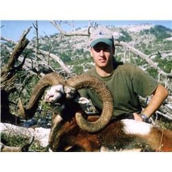 5-day/6-night European Mouflon Sheep for One Hunter and One Observer or Two Hunters