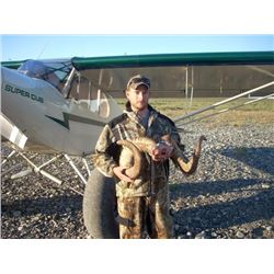 Brooks Range Dall Sheep Hunt for One Alaska Resident Hunter (Air Charter Service)