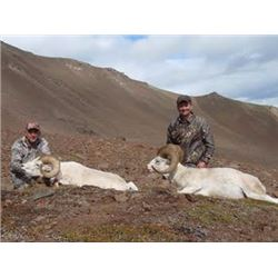 7-Day Wrangell Mountains Alaska Dall Sheep Hunt for Two Alaskan Resident Hunters (Air Charter Servic
