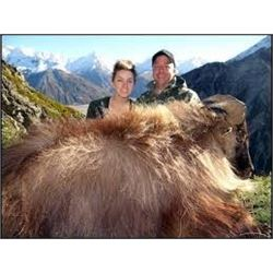 5 1/2-day/5-night New Zealand Himalayan Bull Tahr Hunt for One Hunter and One Observer