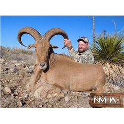 5-day New Mexico Aoudad Rifle Hunt for Two Hunters