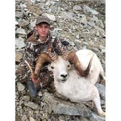 9-day Fully Guided Alaska Dall Sheep Hunt in Tok Management Area for One Alaska Resident Hunter