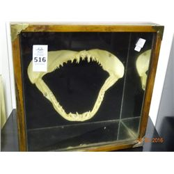 Shadow Box w/Shark Teeth