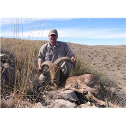 New Mexico Aoudad (Guided)