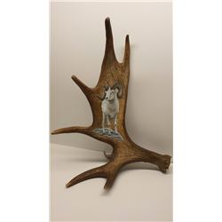 Dan Christ Print Dall Sheep on Moose Antler