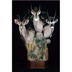 Reflections of the Wild Taxidermy