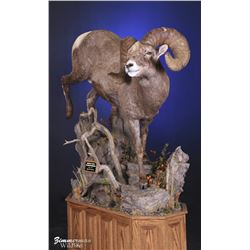 Life-Size North American Sheep Mount with Hardwood Base and Habitat