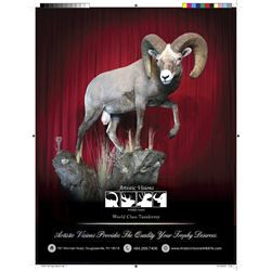 Life-Size Wild Sheep or Ibex Taxidermy