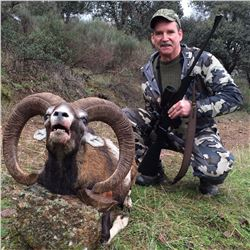 Trophy European Mouflon Hunt in Spain