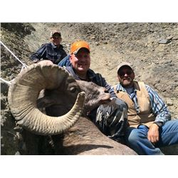Wyoming Governor's Rocky Mountain Bighorn Sheep License