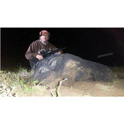 Wild Hog Hunt in Georgia