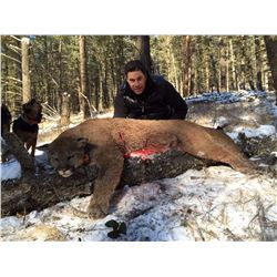 British Columbia - Rocky Mountain High Mountain Lion Hunt