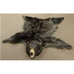 Black Bear rug mount, Montana