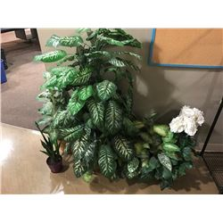 LOT OF EVERGREEN PLANTS