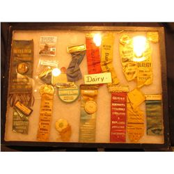 "12"" x 16"" Ryker Display Case with a large group of Dairy Ribbons, Badges, and medals dating back one"
