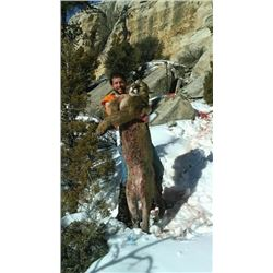Six Day Mountain Lion Hunt for One