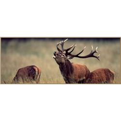 Four Day Hunt for One for a Silver Medal Red Stag