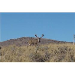 Five Day Archery Elk Hunt for One, Can Upgrade to Muzzleloader