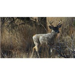 Five Day Coues Deer Hunt for One