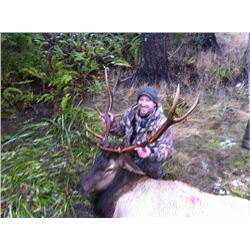 Spot and Stalk Five Day Rifle Elk Hunt for Two
