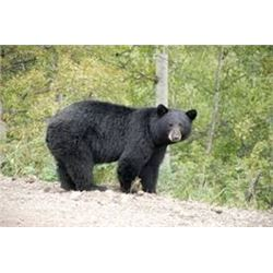 Seven Day Black Bear Hunt for One